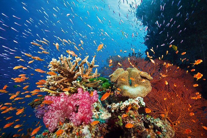 Kohle statt Korallen